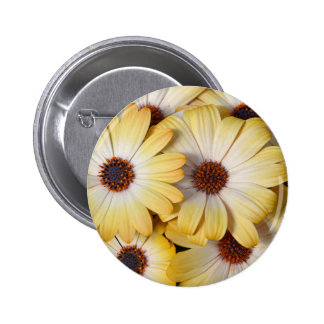 Yellow and white osteospermum flowers buttons