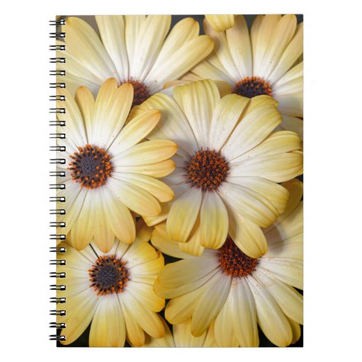Yellow and white osteospermum flowers note books