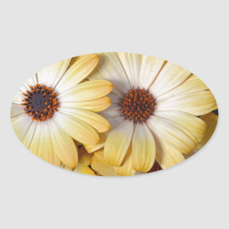 Yellow and white osteospermum flowers oval sticker