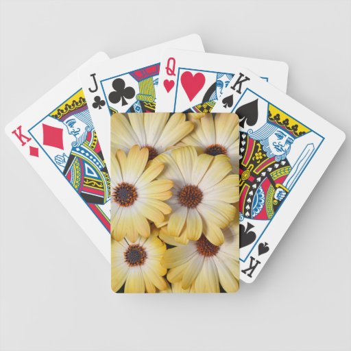 Yellow and white osteospermum flowers card deck