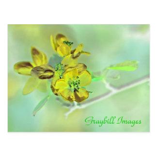 Yellow Apple Blossom Postcard