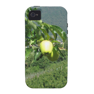 Yellow apples on tree branches iPhone 4/4S covers