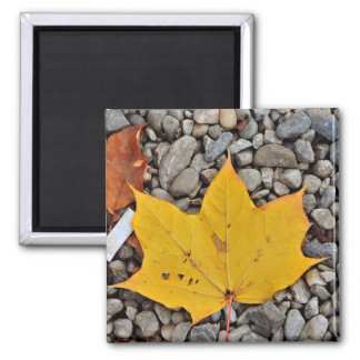 Yellow autumn leaf magnets
