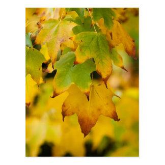 Yellow Autumn Postcard Postcard