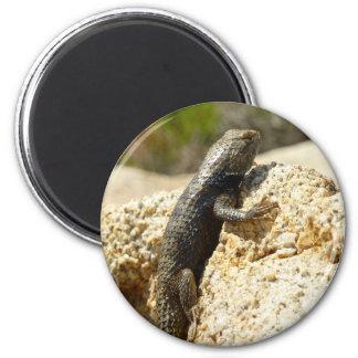 Yellow-Backed Spiny Lizard at Joshua Tree Magnet