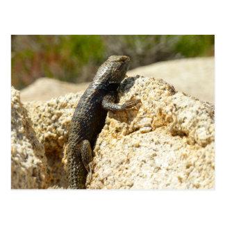 Yellow-Backed Spiny Lizard at Joshua Tree Postcard