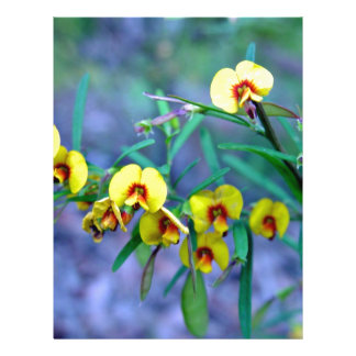 Yellow Bacon and Egg plants Full Color Flyer