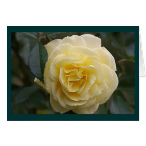 Yellow Beauty Card