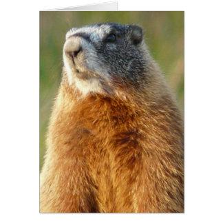 Yellow-bellied Marmot Card