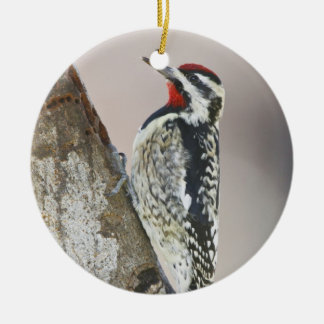 Yellow-bellied Sapsucker male feeding on sap Ceramic Ornament