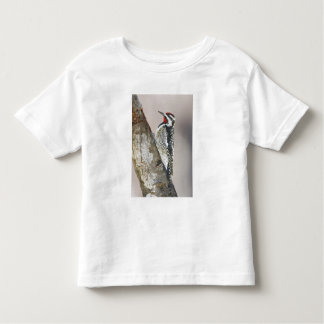 Yellow-bellied Sapsucker male feeding on sap Toddler T-Shirt