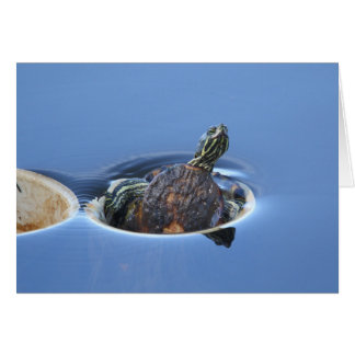 Yellow Bellied Slider Card