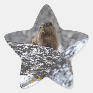 Yellow Belly Marmot Star Sticker