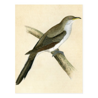 Yellow Billed Cuckoo Postcard