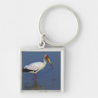 Yellow-billed Stork, Masai Mara, Kenya Key Ring