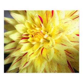 Yellow Bloom Photo Print