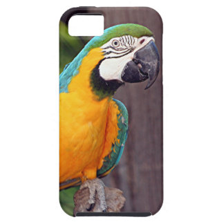 Yellow & blue macaw bird iPhone 5 cover