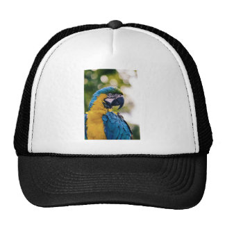 Yellow Blue Macaw Parrot Cap