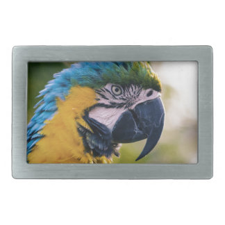 Yellow Blue Macaw Parrot Rectangular Belt Buckle