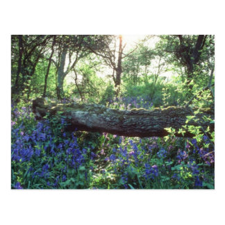Yellow Bluebell wood, Howe Park Wood, Milton Keyne Postcard