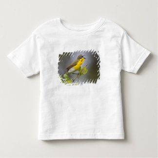 Yellow-breasted Chat (Icteria virens) singing on Shirts