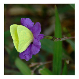 Yellow Butterfly and Purple Flower Acrylic Wall Art