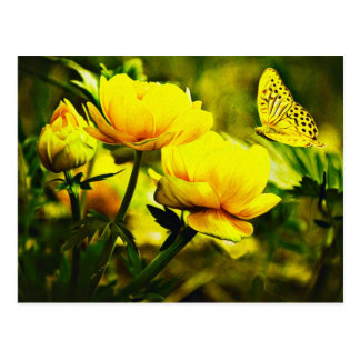 Yellow Butterfly and the Rose Postcard