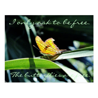 Yellow Butterfly in the Sun Postcard