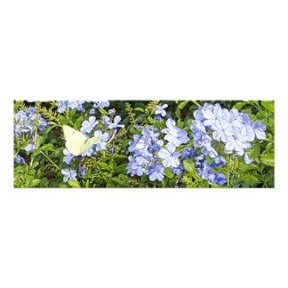 Yellow Butterfly Lavender Blue Plumbago Flowers Photo Print