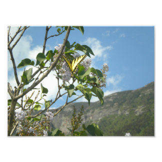 Yellow Butterfly on Lilac in White Mountains Art Photo