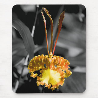 Yellow Butterfly Orchid Mouse Pad