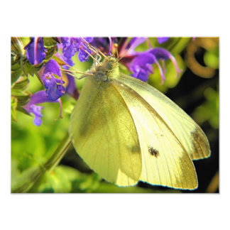 Yellow Butterfly Photography Photo Print
