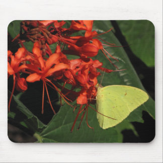 Yellow butterfly, red flowers mouse pad