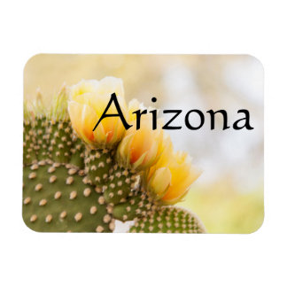 Yellow cactus flowers as they bloom , Arizona Magnet