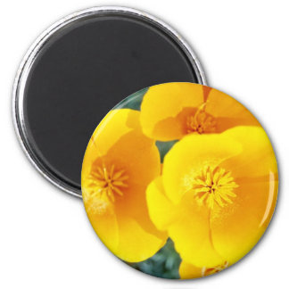 yellow California poppies in full bloom flowers Magnet