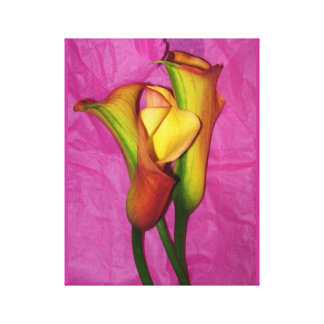 Yellow Calla Lilies on Pink Canvas Print