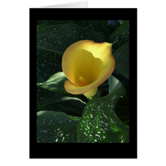 Yellow Calla Lily Blank Notecard