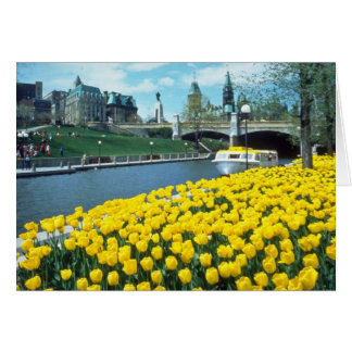yellow Canadian Tulip Festival, Rideau Canal, Otta Card