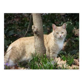 Yellow Cat In Grass, 2 Postcard