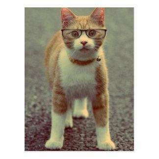 Yellow Cat Rocks The Glasses Postcard
