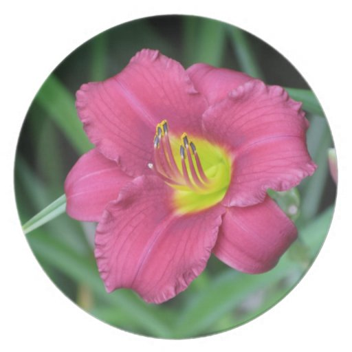Yellow Centered Pink Flower Plate