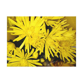 Yellow Chrysanthemum Flowers Canvas Print