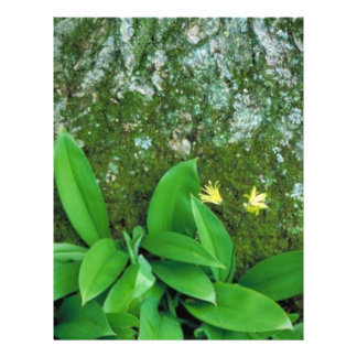 Yellow Clintonia Full Color Flyer