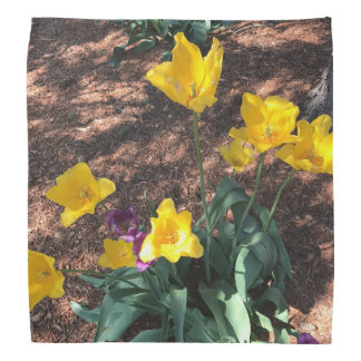 yellow colored tulip type flowers in spring bandana