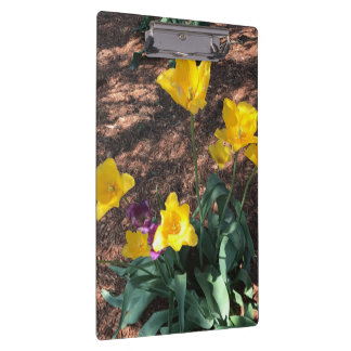 yellow colored tulip type flowers in spring clipboard