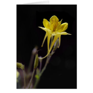 Yellow Columbine Card