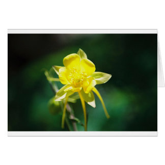 Yellow Columbine Wildflower Card