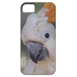 Yellow Crested Cockatoo (iPhone 5 Case) iPhone 5 Cover