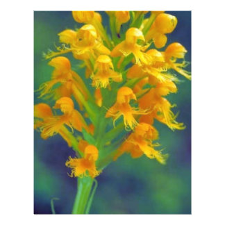 Yellow crested orchid flyers