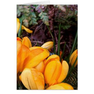 Yellow Crocus Blank Greeting Card